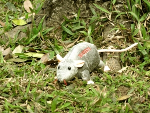 Gấu bông chuột