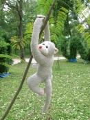 Khỉ xám hugo