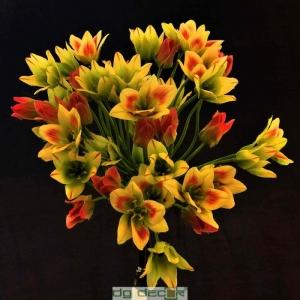 Pháo hoa