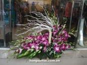 Hoa vip 18