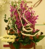 Hoa để bàn 48