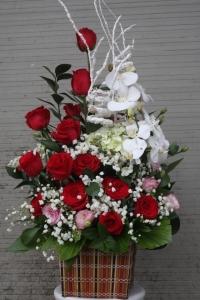 Hoa tình yêu 123