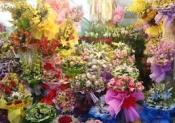 Điện hoa Hồng Ngự, hoa tươi Hồng Ngự, Shop hoa Thị Xã Hồng Ngự tỉnh Đồng Tháp.