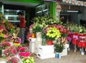 Điện hoa Đầm Dơi, hoa tươi Đầm Dơi, shop hoa tươi Đầm Dơi Cà Mau.