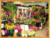 Điện hoa U Minh, hoa tươi U Minh, shop hoa tươi U Minh Cà Mau.