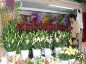 Điện hoa cà mau, hoa tươoi cà mau, shop hoa tươi cà mau.