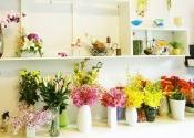 Điện hoa Ngọc Hiển, hoa tươi Ngọc Hiển, shop hoa tươi Ngọc Hiển Cà Mau.