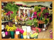 Điện hoa Thạnh Trị, hoa tuơi Thạnh Trị, shop hoa tươi Thạnh Trị Sóc Trăng.