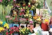 Điện hoa an phú, hoa tươi AN PHú, Shop hoa AN Phú AN Giang.