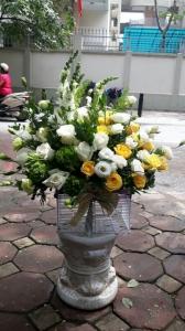 hoa vip 40